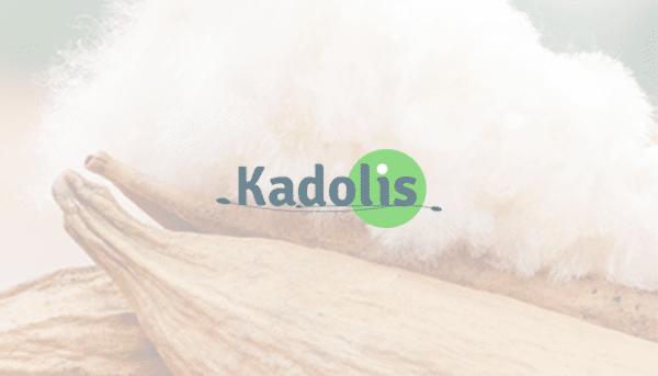 Kadolis – Audit Webanalytics, ergonomique et tests utilisateurs